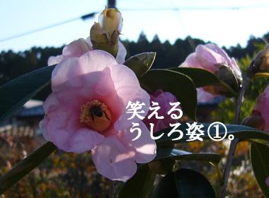 P1050832.JPG